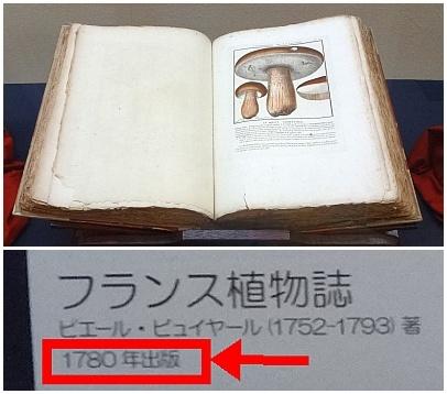 kinoko10.jpg