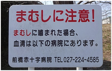 mamushi01.jpg