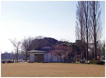 saku02.jpg
